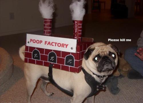 poop-factory2